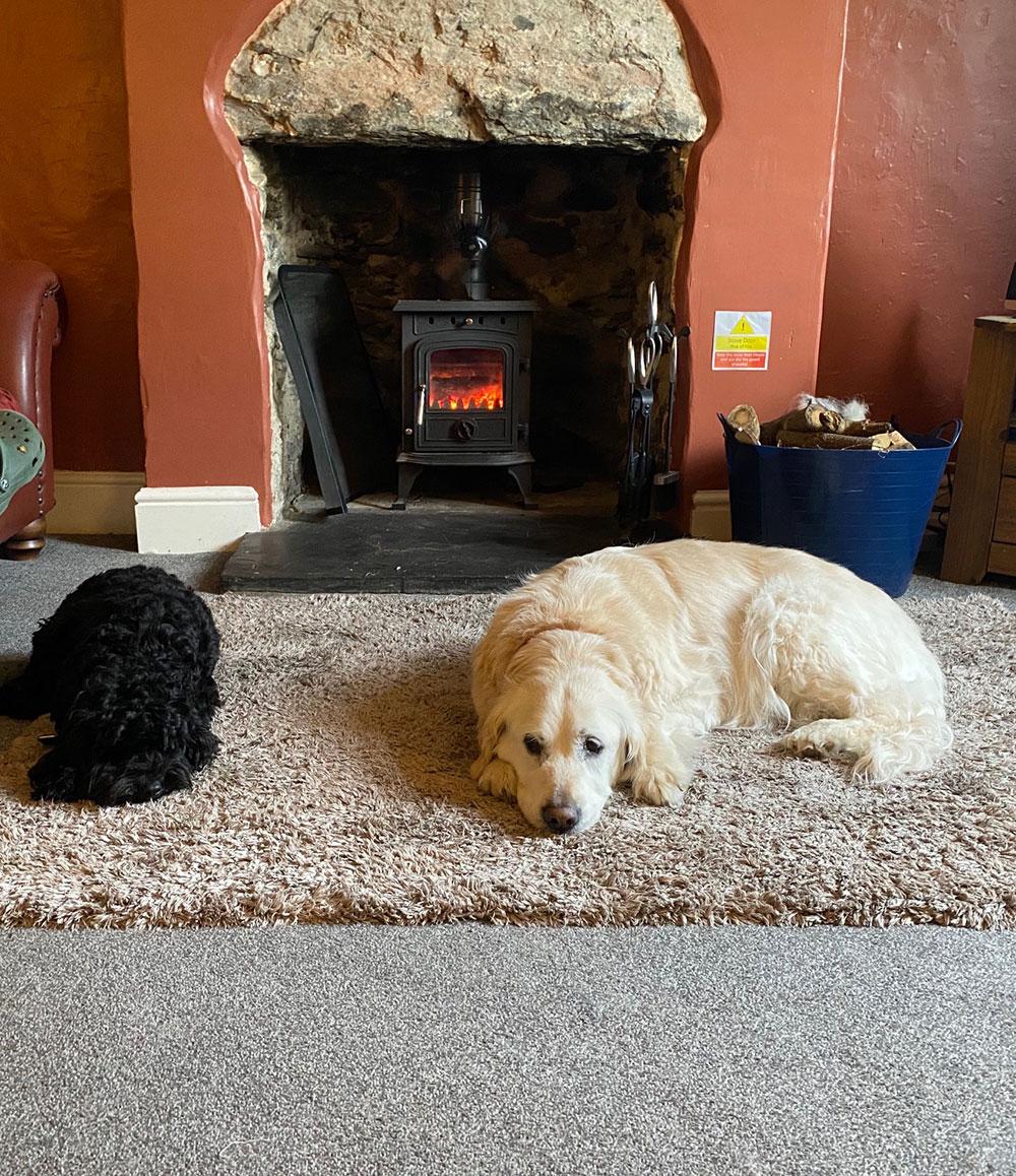dog-friendly-